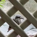 lots of these birds around the park. view from the verandah