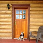 Pet friendly cabin = happy dog!
