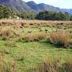 Halls Gap Lakeside Tourist Park의 사진