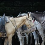 Our intrepid horses