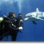 dive with dolphines