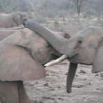 ex orphans playfully sparring in the evening at Ithumba stockades