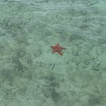 Seeing starfish during the snorkeling excursion