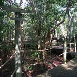 The path to our tree house.