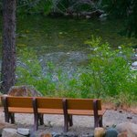 Downieville River Inn and Resort의 사진