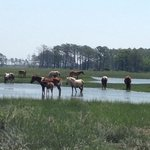 Chincoteague Island Adventures