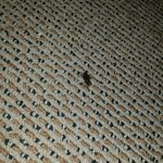 Theres even a cockroach in this room.