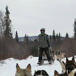 Crazy dogsled guide riding backwards.
