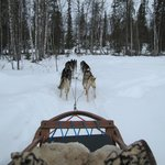 Dogsledding adventure