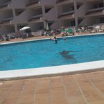 Paloma Beach Apartments의 사진