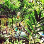 Tropical garden from our second room