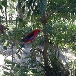 lorikeet in the tree outside our tent