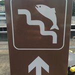 Fish ladder...this way