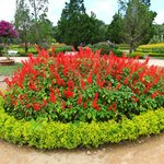Photo de Dalat Flower Park