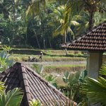 Bhanuswari Resort & Spa resmi
