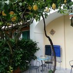 All rooms have terraces canopied with lemons