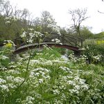 bridge and wildflowers