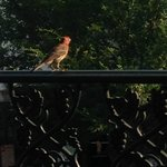 Bird on Balcony