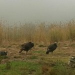 Wild turkey right outside the room. Sometimes fog comes in early but usually quickly burns off.
