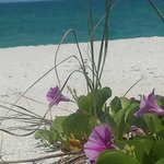 On the Beach- Casey Key Foto