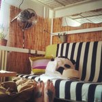 Foto de The Cozyness Downtown Hostel