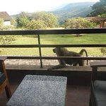 Our baboon on our balcony