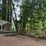 Φωτογραφία: Santa Cruz Redwoods RV Resort