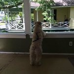 Bailey enjoying the front porch and people watching