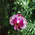 Orchids where amazing