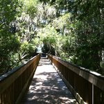 The boardwalk of Peggy Park Trail