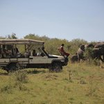 thrilling game drives