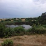 A little lake in the dunes ,Torre del Lago