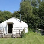 The Walnut yurt