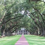 Bild från Oak Alley Plantation
