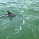 Dolphins came to visit
