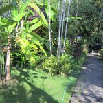 Beatiful tropical gardens