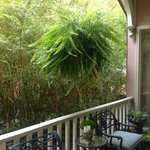 Veranda with lush fern