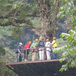 Zipline platform high in tree
