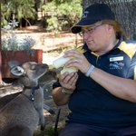This caring staff member looks after and adopts young kangaroos. Great job