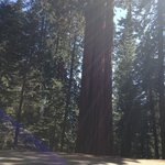 Sequoia Natl Park