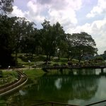 MacRitchie Reservoir Foto