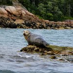We saw this seal canoeing near the campground.