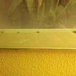 bugs in the picture frames above the beds