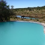 Royal Madikwe Exclusive Safari Residence의 사진