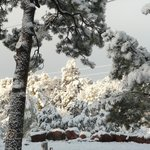 صورة فوتوغرافية لـ ‪Colorado Springs Mountaindale Cabins & RV Resort‬