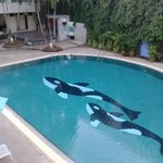 Orca's in the pool!