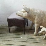 Companionable pigs on the balcony