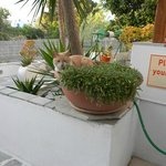 Rico the cat enjoying a plant-pot siesta