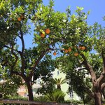 Orange & Lemon Trees in the hotel grounds