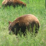 Beautiful wildlife!  Just kidding!  No bears at the campground!  But a must see at Bear Country!